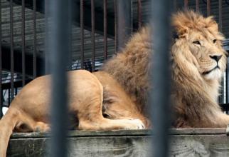 Leul a fost menținut la limită