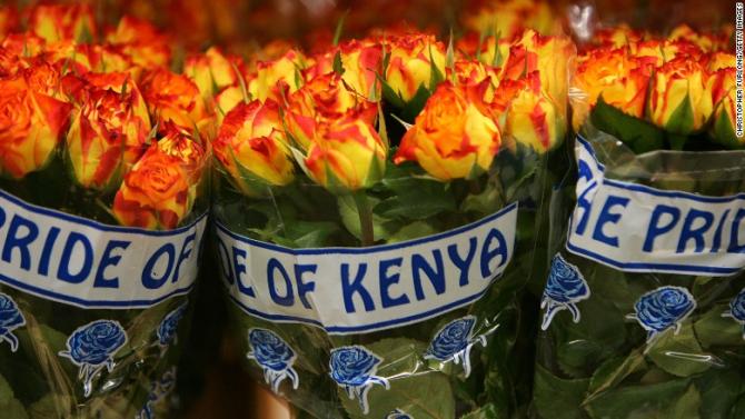 Trandafirii din Kenya sunt mai ieftini și sunt foarte parfumați