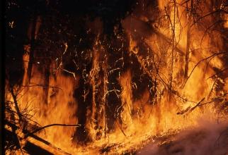 Zeci de pompieri luptă cu flăcările