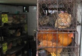 Shenzhen devine primul oraș chinezesc care interzice consumul de câini și pisici