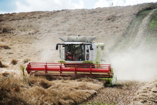 Seceta a afectat recoltele de porumb și floarea soarelui