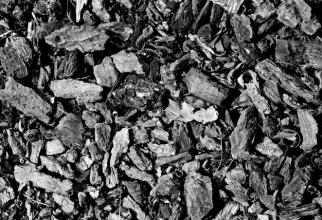 INS: Producția de cărbune a SCĂZUT cu peste 37%