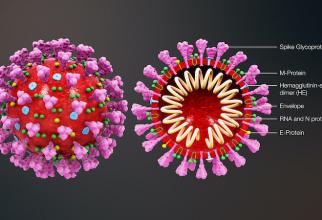 OMS a AVERTIZAT populația! Cât o să dureze pandemia noului coronavirus