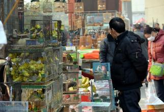 China devine focarul unei alte boli crunte