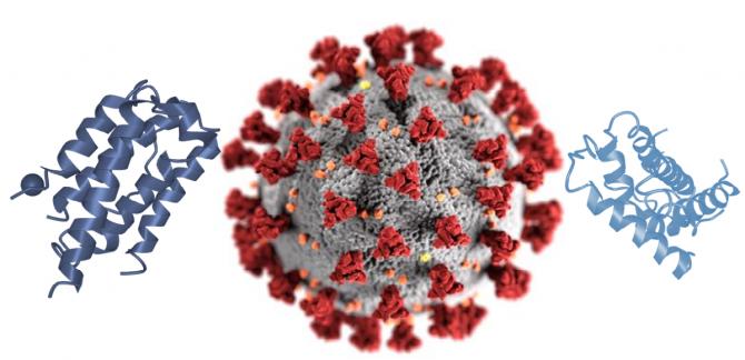 Cercetarea ar putea fi cheia pentur tratamentul formelor grave de Covid-19