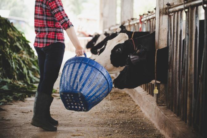 Guvernul are prevăzute granturi pentru agriculutră