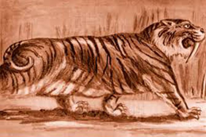 Tigri cu colți sabie trăiau pe teritoriul României