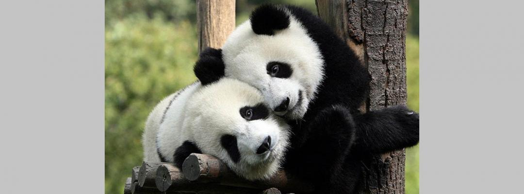 Animale în alb și negru