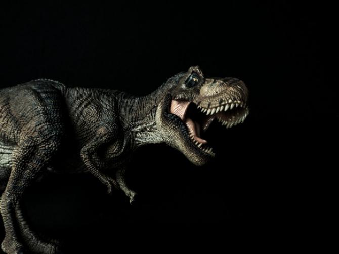 Scheletul unui T-Rex a fost scos la licitație! Suma este COLOSALĂ
