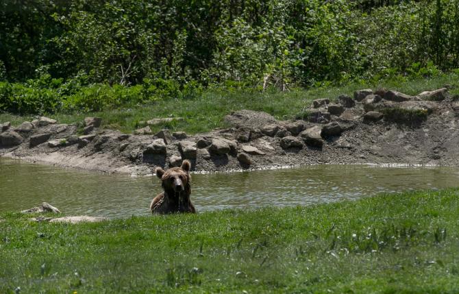 Urșii de la Zărnești vor primi mâncarea care va fi transportată cu un vehicul donat de Profi
