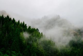 ANM a emis ATENȚIONĂRI de Cod galben de ceață în 3 județe
