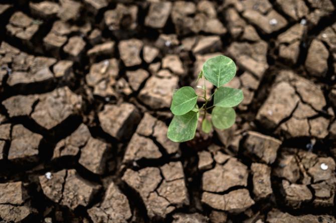 Seceta extremă a produs peste 80% din PAGUBELE anului agricol