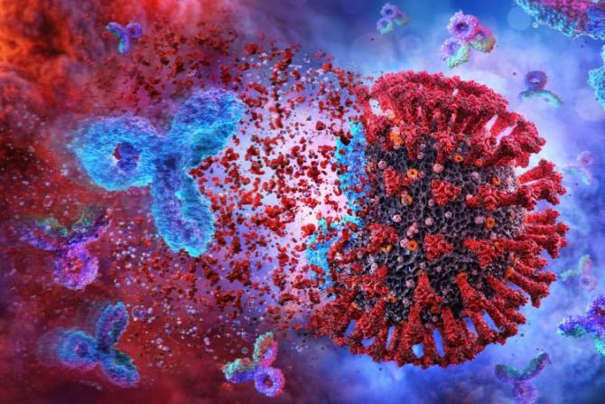 Terapia cu anticorpi ar putea începe să fie utilizată din luna martie