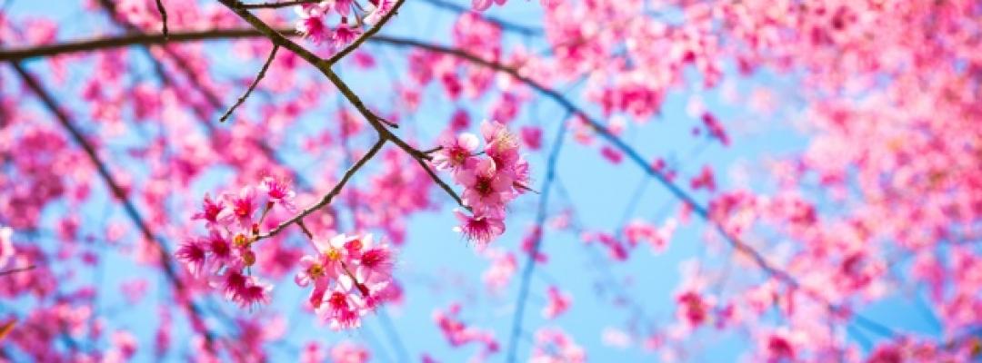 Vă dorim o primăvară minunată!