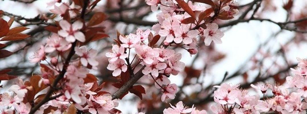 Vine primăvara!