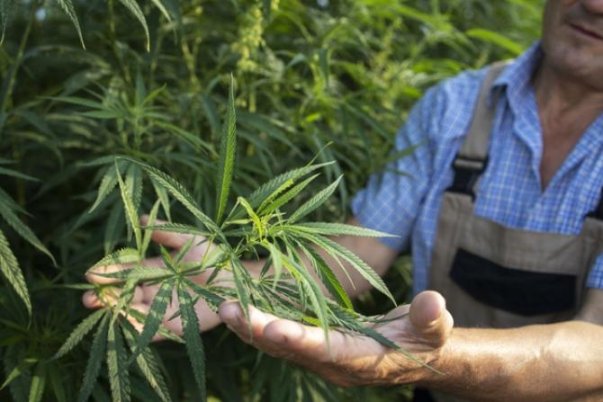 Mexicul, la un pas de legalizarea consumului de canabis