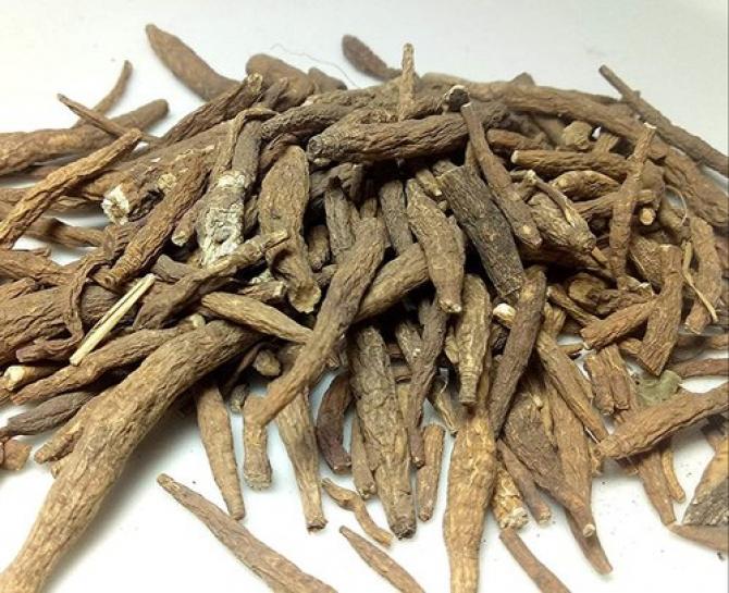 Rădăcini de aconit