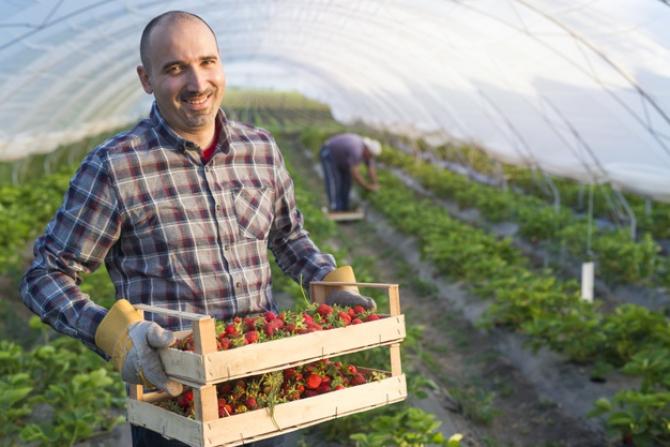Muncitorii sezonieri vor avea mai multe garanții