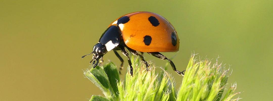 Lumea insectelor