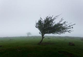 Vântul va sufla cu putere