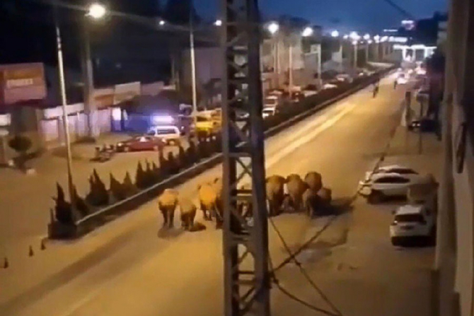 Cei 15 elefanți au pornit spre nordul Chine de anul trecut