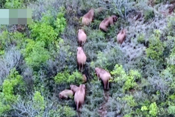 Elefanții sunt monitorizați continuu