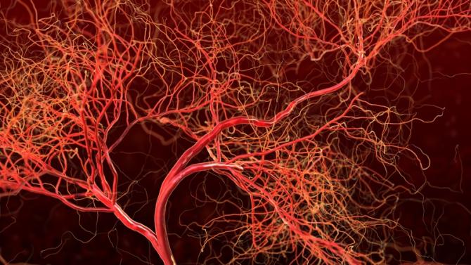 Plasma se scurge din capilarele sanguine