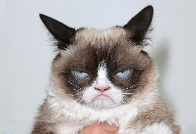 Grumpy Cat a fpcut furori pe internet în anii trecuți