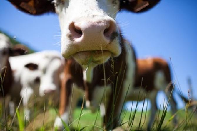 Pui, vaci și apartamente oferite la loteriile pentru vaccinare în Asia