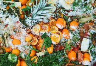 40% din alimente pe plan mondial ajung la gunoi în timp ce mai multe națiuni mor de foame
