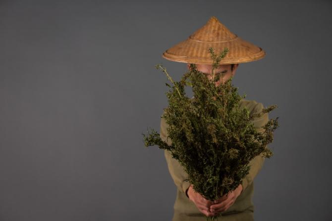 Canabisul a fost prima oară cultivat de chinezi