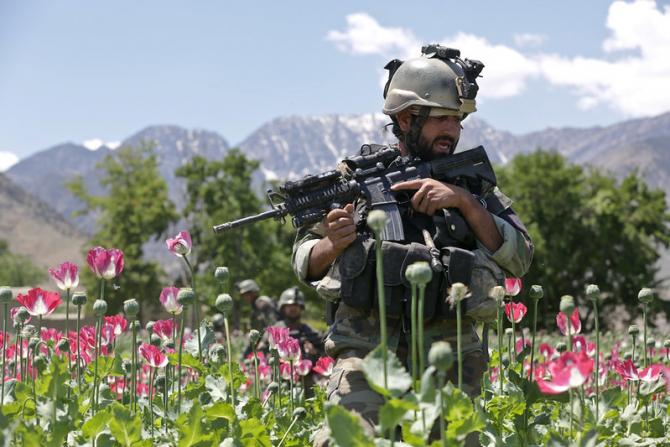 Un militar al armatei afgane se deplasează printr-un lan de mac. Acum armata a trecut de partea talibanilor cu tot cu armamentul din dotare, dotare ce a fost livrată de americani