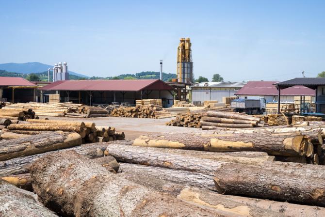 Exploaratea forestieră în România se intensifică