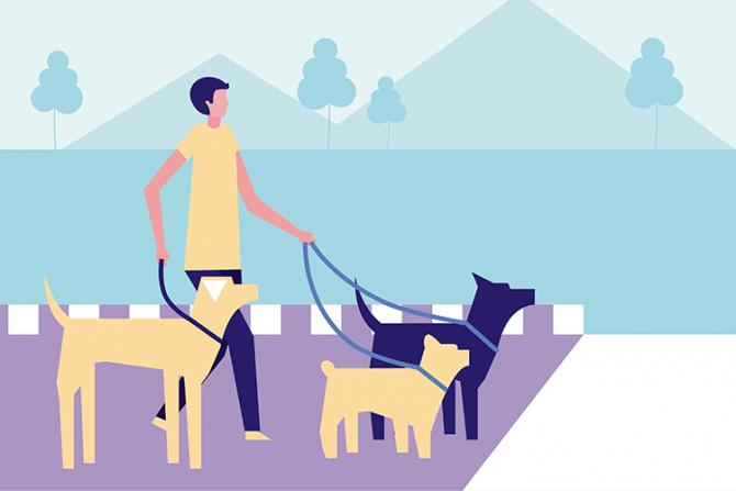 Plimbatul câinilor este o activitate care poate fi productivă