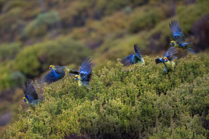 O boală misterioasă face ravagii printre păsările din SUA. Oamenii de ştiinţă sunt bulversaţi