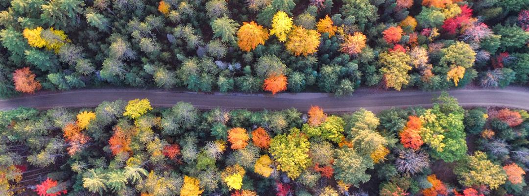 Toamna în pădure