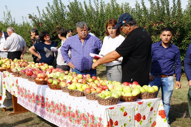 Cei care merg la cules de mere pot cumpăra merele cu doar 1 leu /kg