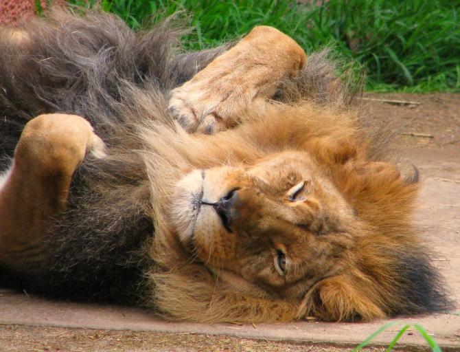 Leul încheie săptămâna în urcare ușoară